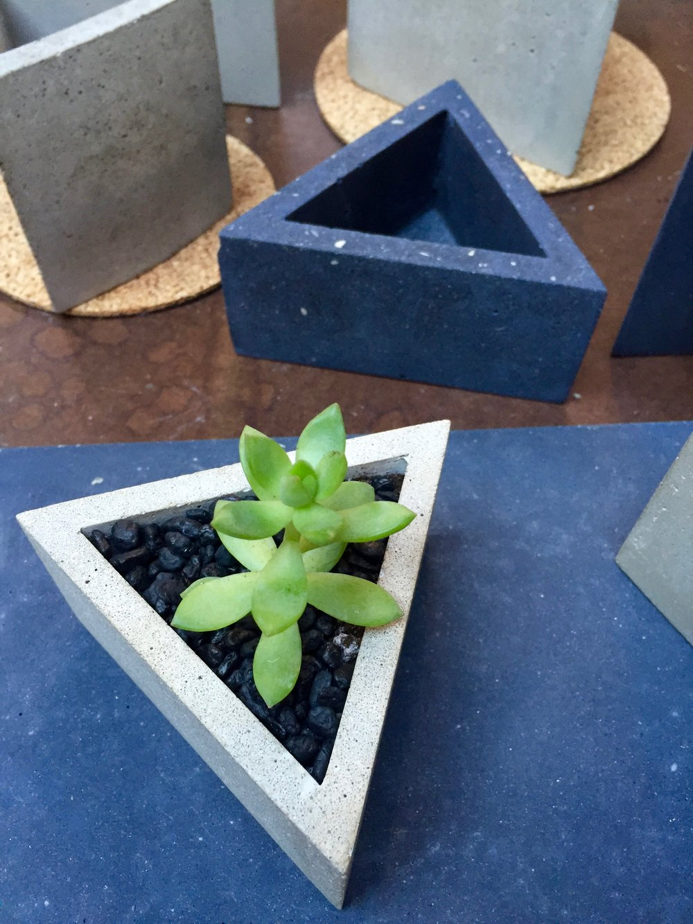 A tender succulent in a masculine, sharp-edged, concrete pot. It reminded me of you, honey.