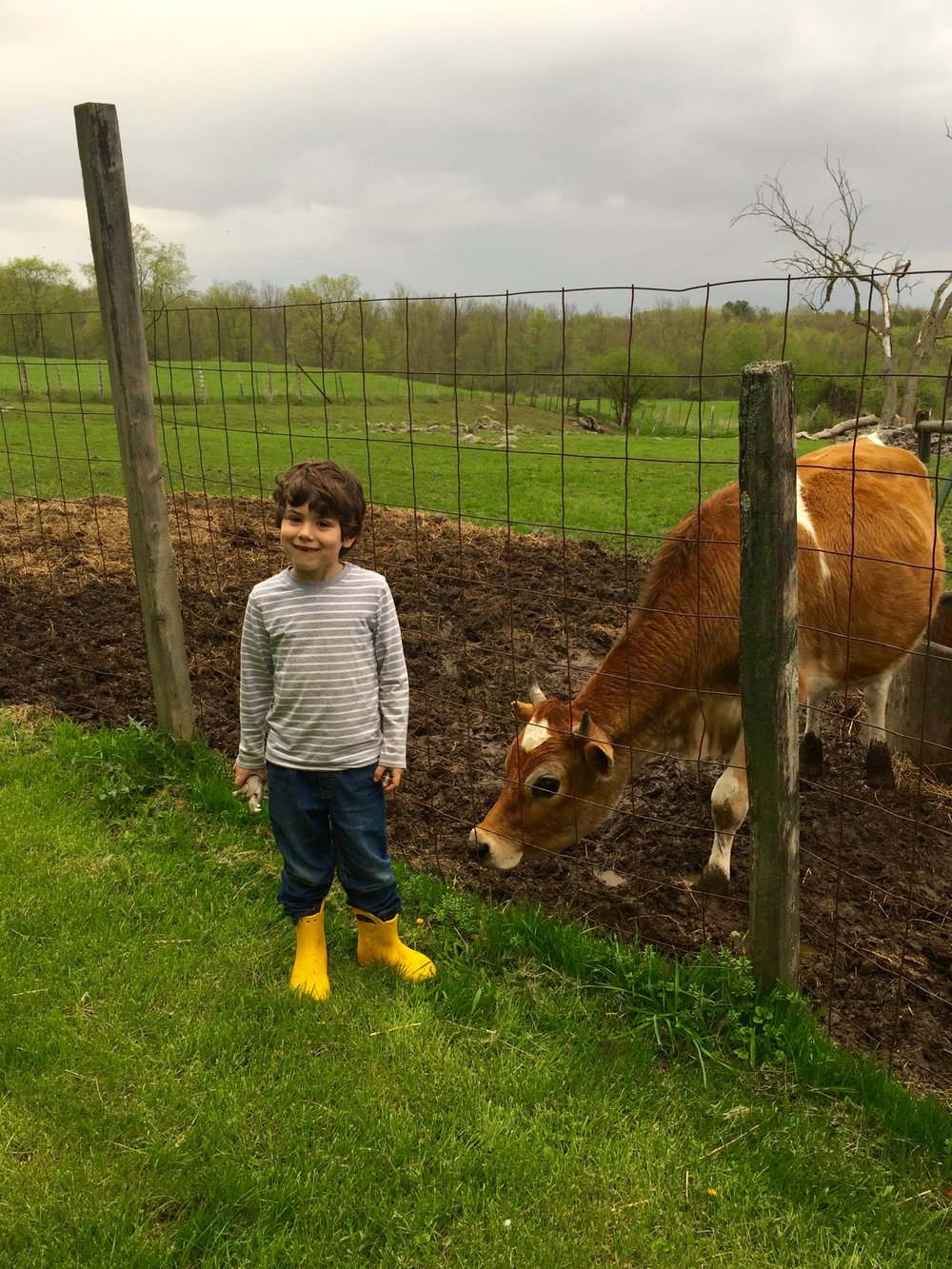 Archer introduces himself to the neighbor's cow, who lives behind the outdoor seating area.