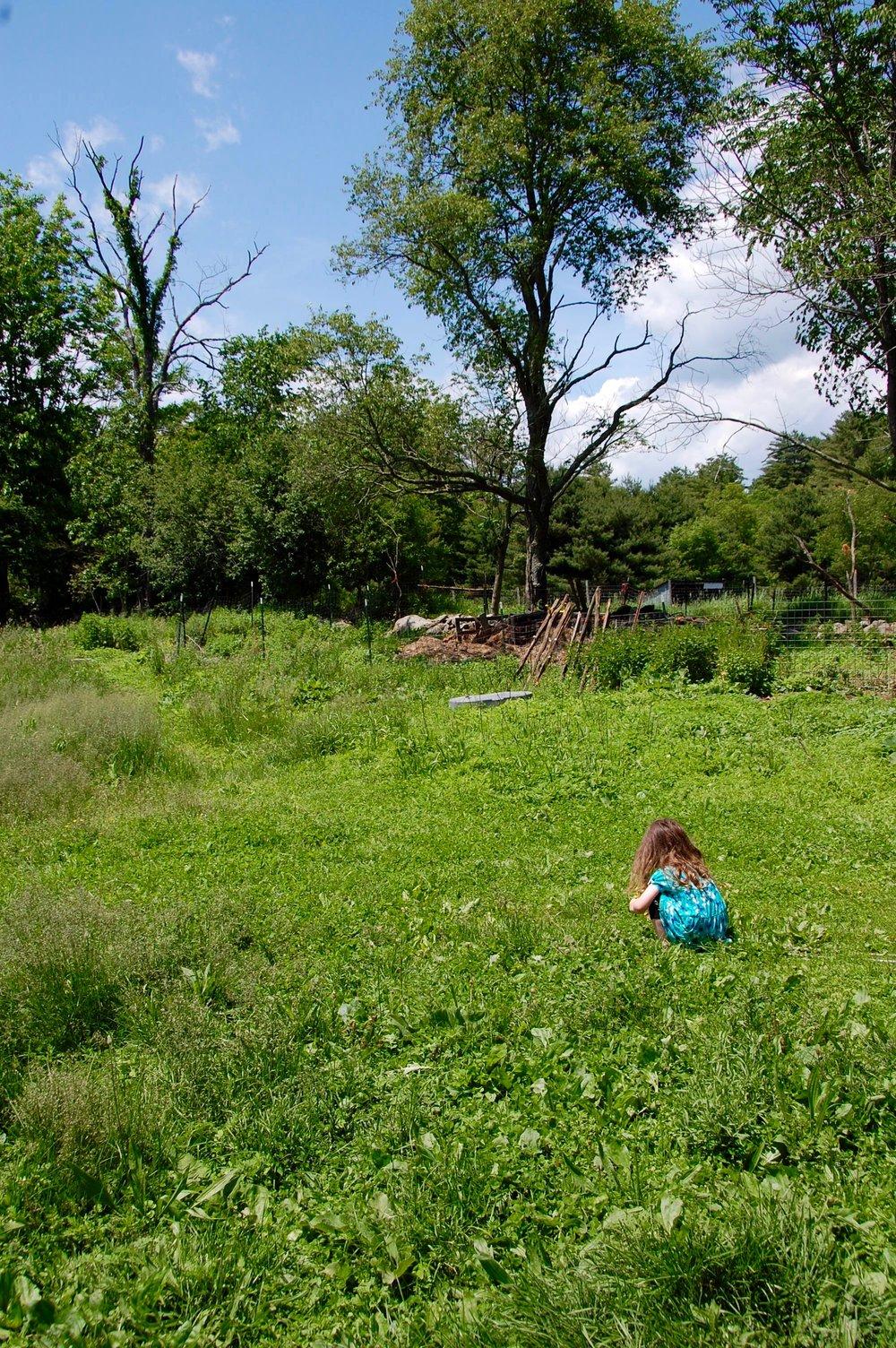 honey hollow farm stay free range kid