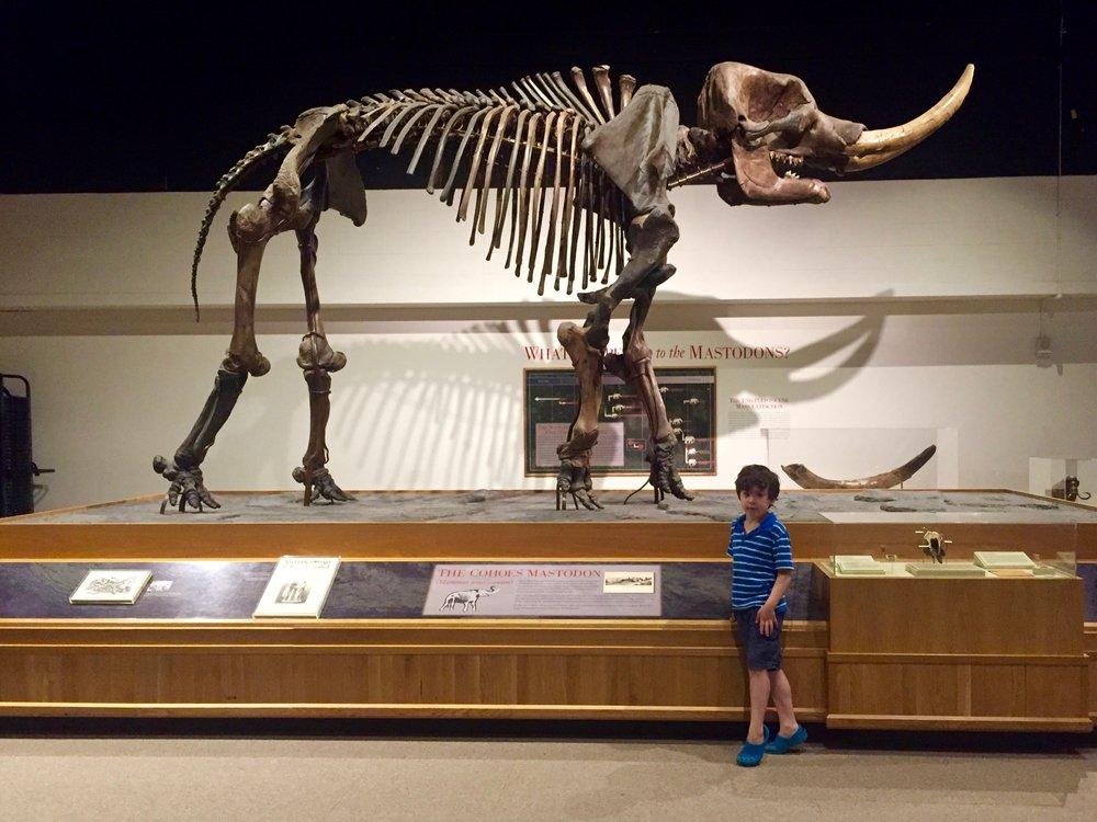mastodon ny state museum.jpg
