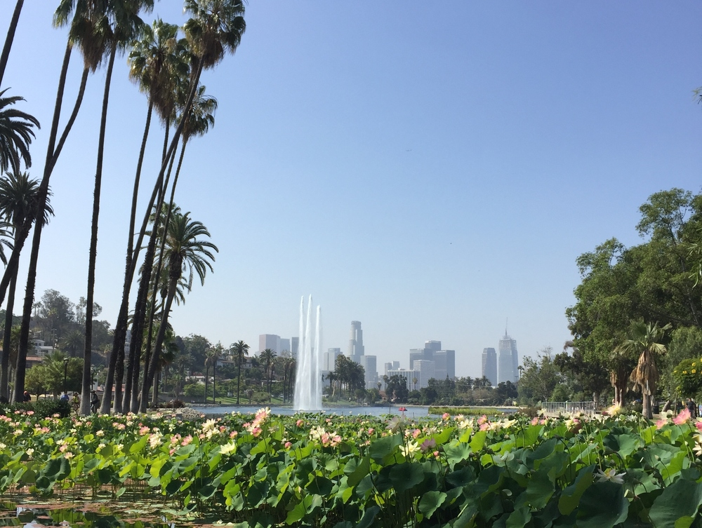 Echo Park Lake in all its majestic-ness!