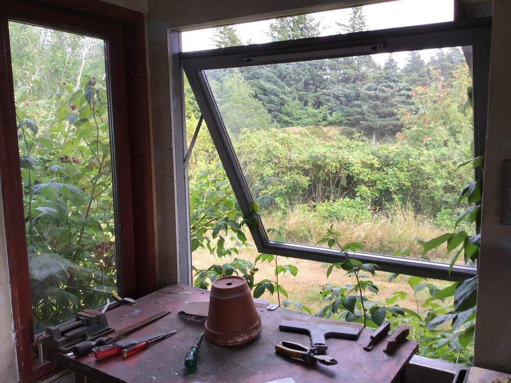 Berries growing through my studio window