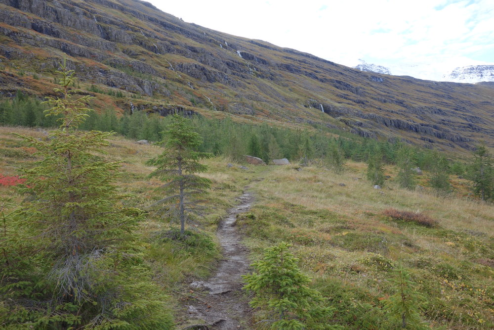 "There is a common joke in Iceland: ""If you ever get lost in a forest, just stand up!"""