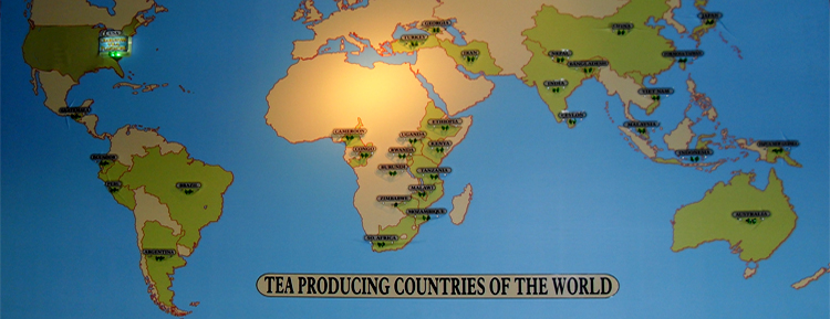 A map of tea producing countries