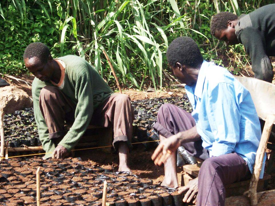 Growing Trees in Kenya copy.jpg