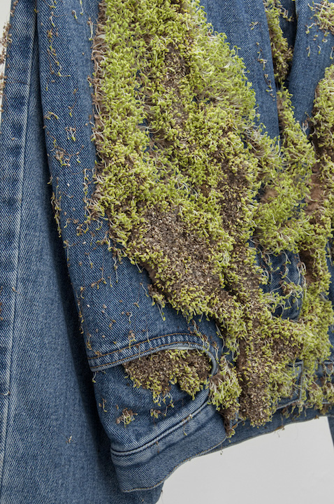 Bea Fremderman,  Untitled (sweatshirt, shirt, jeans) (detail) , 2017, sprouts on clothing, 120 x 24 in