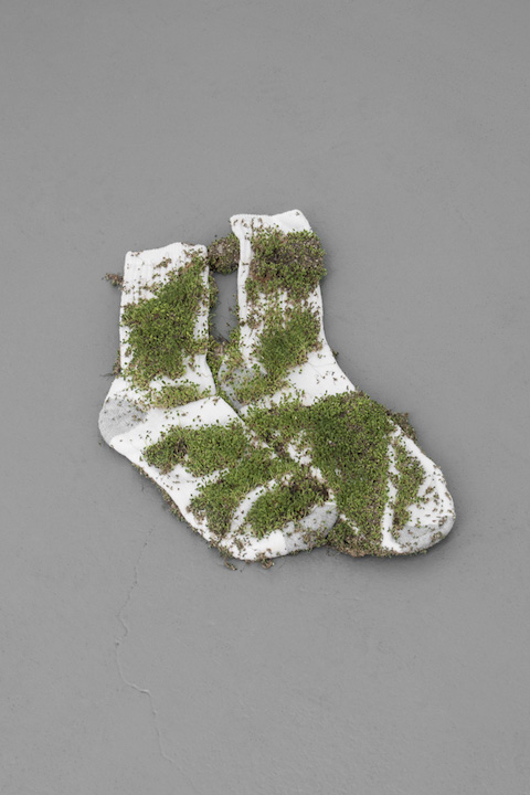 Bea Fremderman,  Untitled,  2017, (Sprout Socks), Sprouts on socks, 16 x 9 in