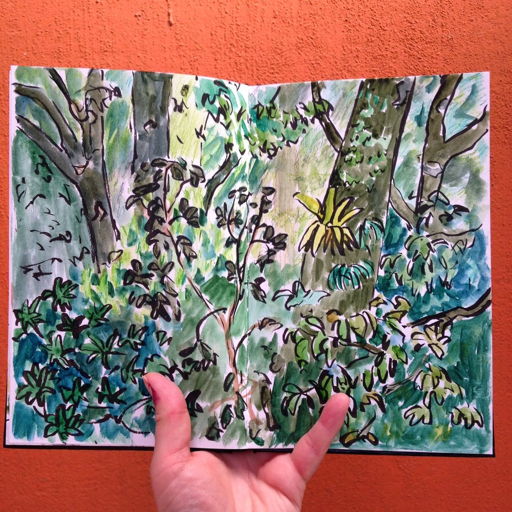 I had some time to sketch the view into the rain forest canopy. So much green!