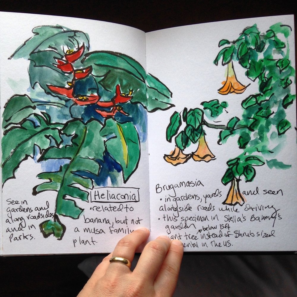 I drew some of the plants we saw often with notes about what I learned about them.