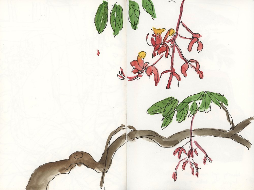 Trying to draw fascinating flowers in the Botanical Garden, but had to give up partway through this drawing because of the mosquitoes. Too many bites and they swelled up HUGE so I decided to move on.