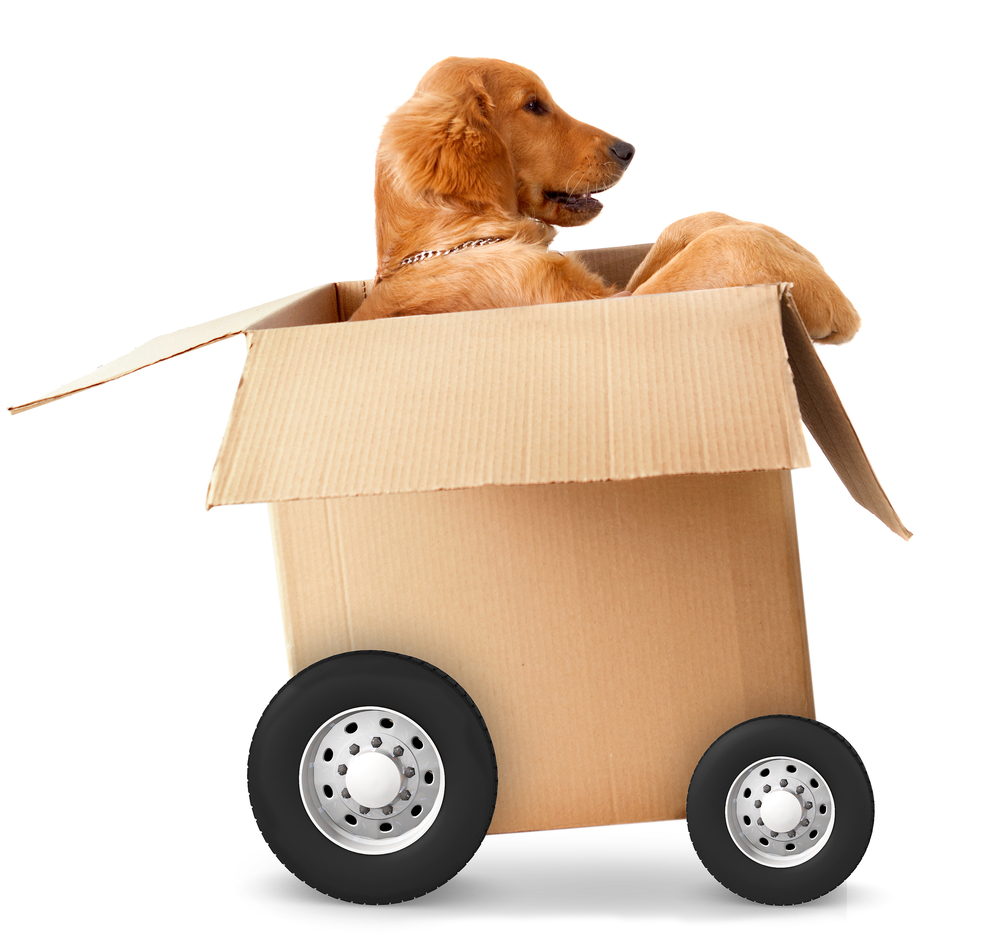 A dog in a moving box ready to go!