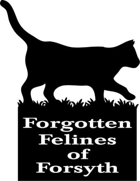 Winston-Salem, NC - Forgotten Felines of Forsyth