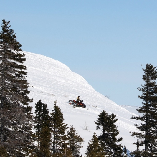 Snowmobiler spotted through the trees.