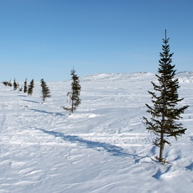 Sea ice trees a.k.a. safety beacons during whiteouts.