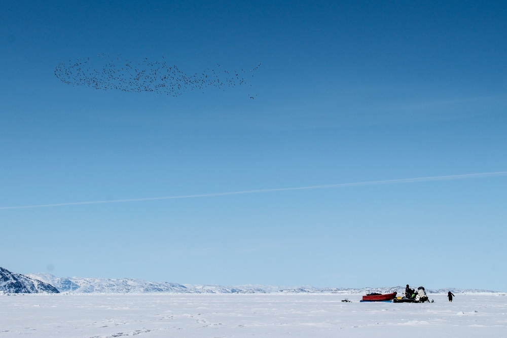A flock of ducks and an Inuit family hunting at the floe edge. Note the GT racer pulled behind the Bravo.