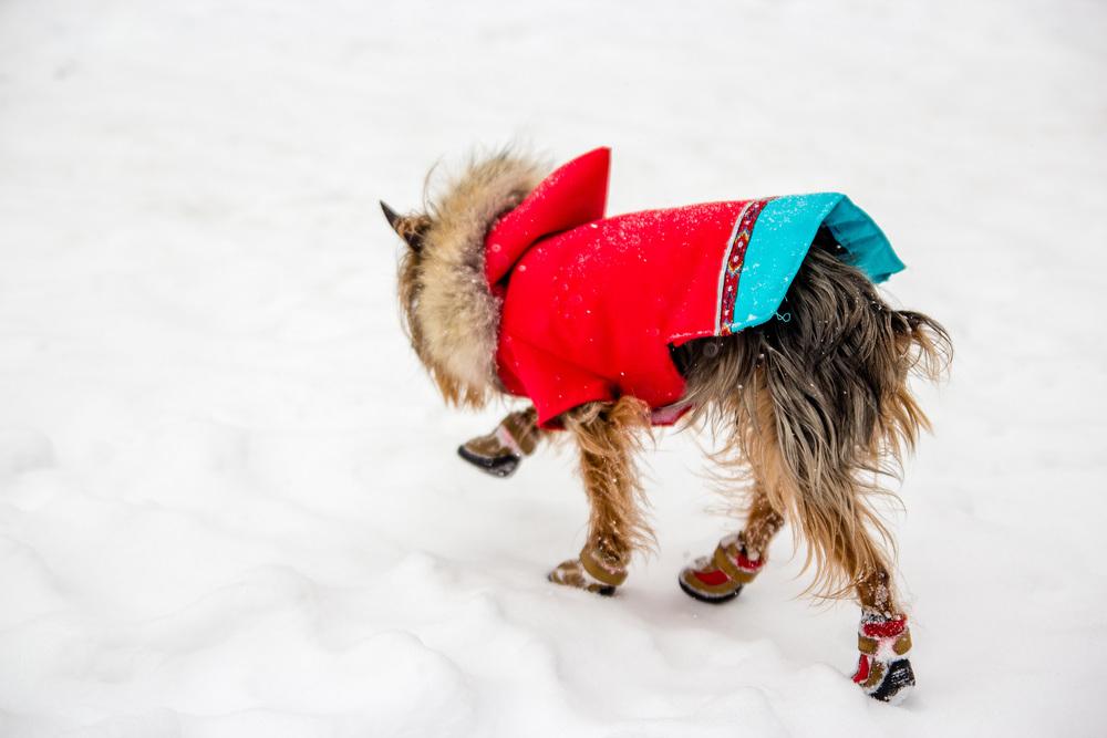 dog-coats