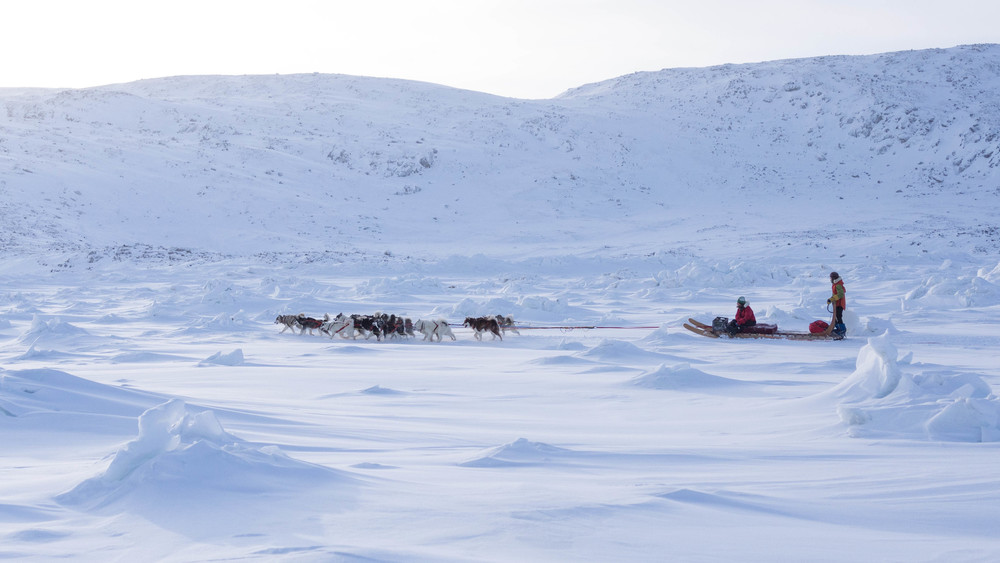 Darting across the tundra at midday.