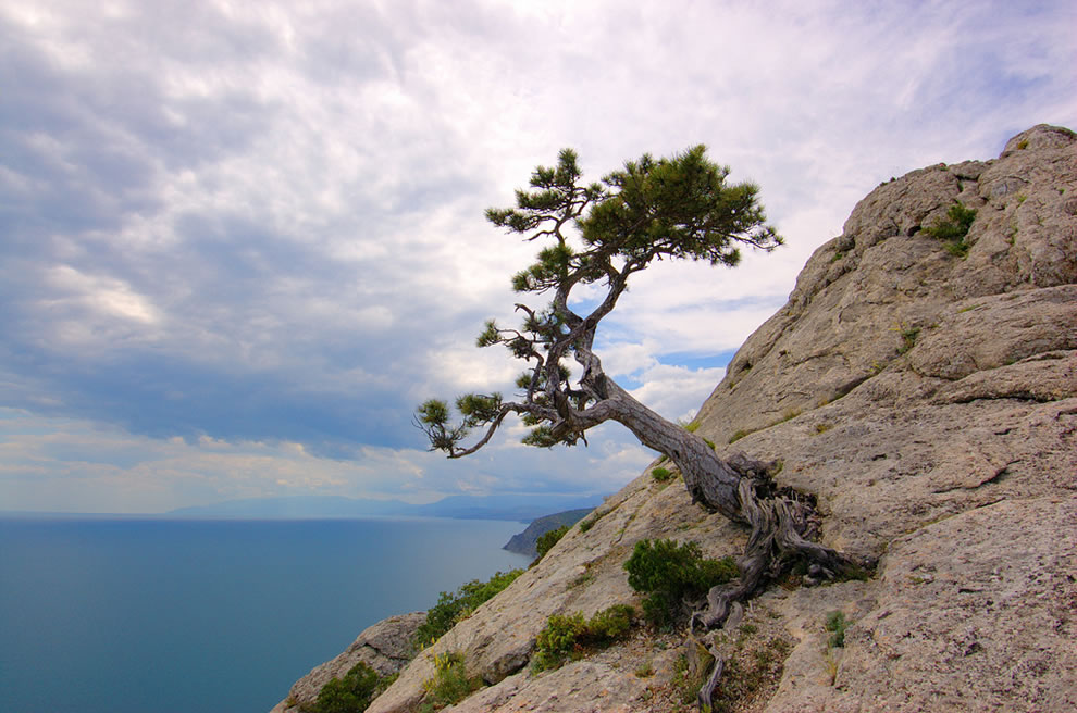 twisted tree on cliff edge rock.jpg