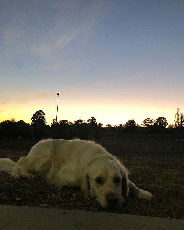 "This view never gets old! Waking up and sweating it out next to your dog with the sunrise is 👌🏼👌🏼👌🏼 We are soo lucky 🙏🏼 As Ning from MAFS would say we have all the ""feels"" 😂 ***Jump in and try us this month and grab your Autumn membership at half price. It's our Easter special! www.fitbitch.com.au/special-offer  #sunrise #outdoorfitness #fitbitchfamily #workoutwithyourdog #mafs #mafsau #feels"
