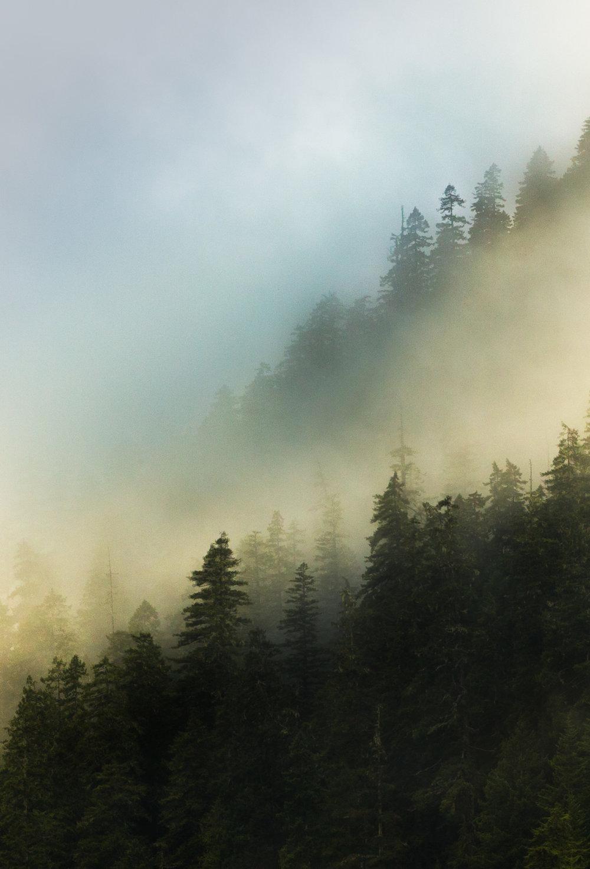 Sutton Mist