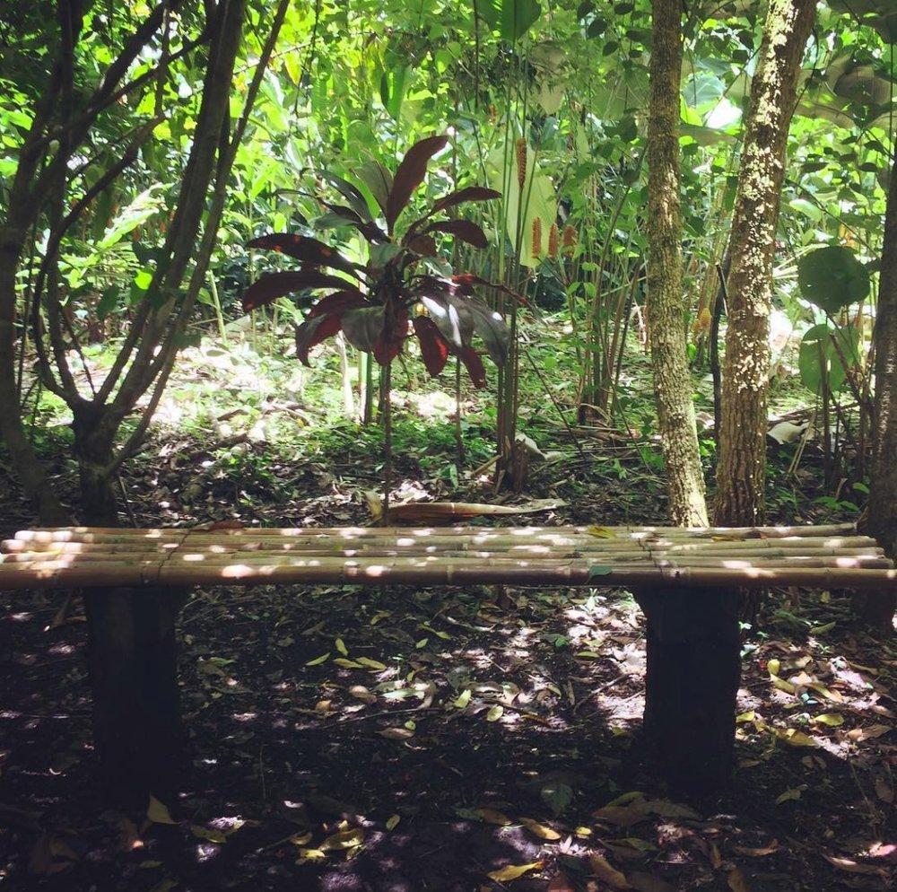 Bioparque y Finca de Cafe Paradiso, Lago de Yojoa, Honduras, 7:16.jpg