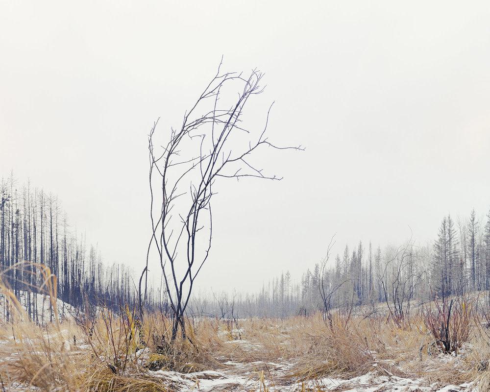 Boreal Wetlands, Fort McMurray, Alberta, Canada, Februray 2017.