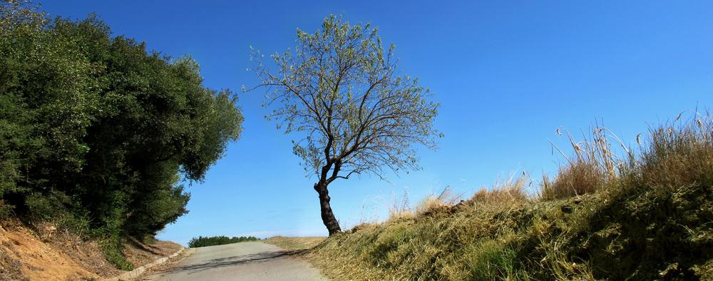 El árbol de nuestro logo, en su hábitat natural