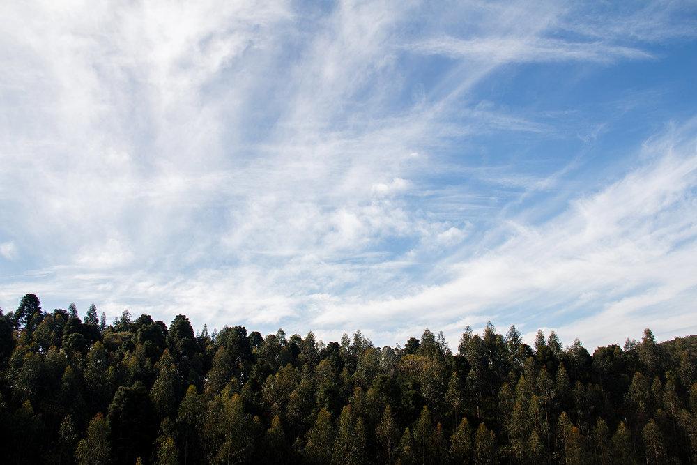 Ensaio-Diogo-Thays-alta-0055.jpg