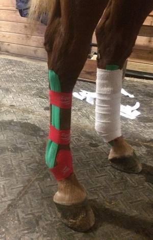 Left Hind taped with a polo wrap for heat activation of the adhesive for taping longevity.  Right hind demonstrates taping for support of Suspensory apparatus