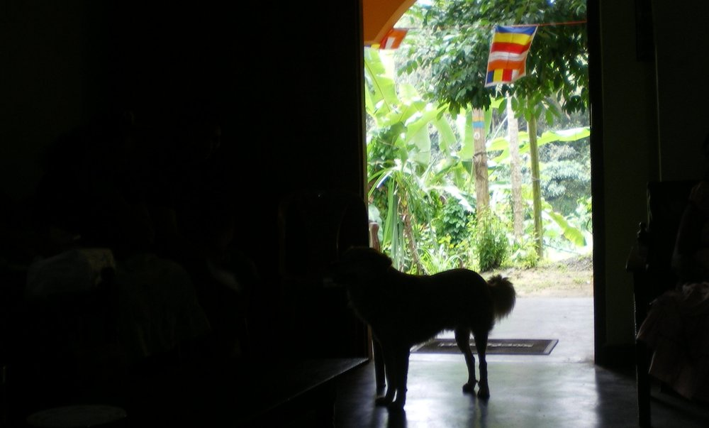 Village dog visiting the microborrowing group meeting