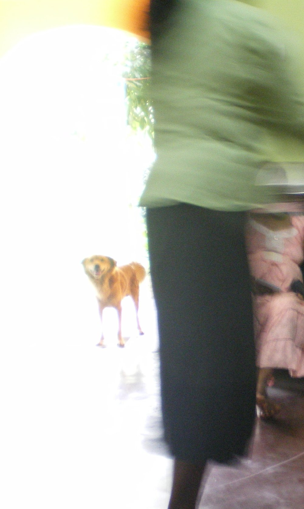 A woman speaks at the small group meeting while a dog looks on from the doorway