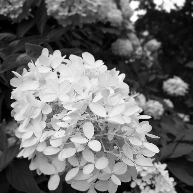 Day 7: Home Time  #blackandwhitechallenge #flowers