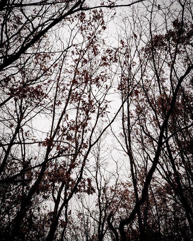 Into the woods. #warnerfamilyholidays  #newhampshire #killerturkeysontheloose #nurture