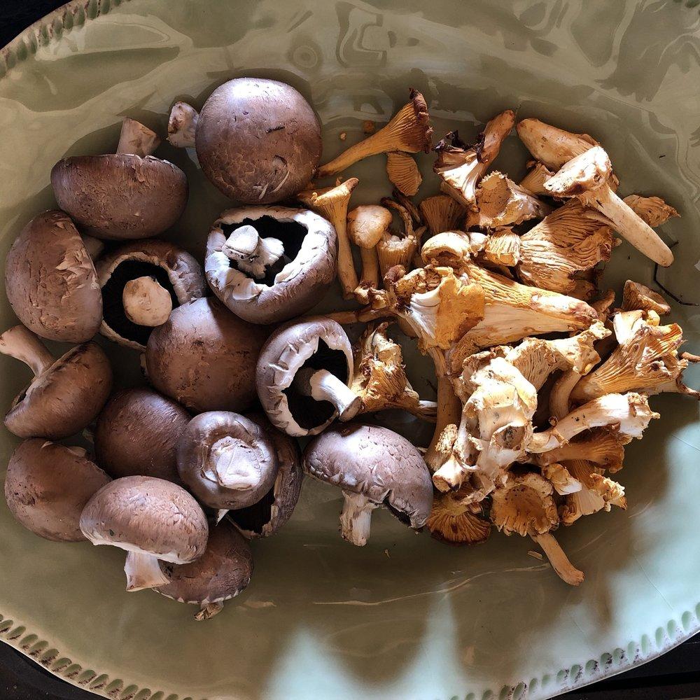 Mushroom_mix.jpg