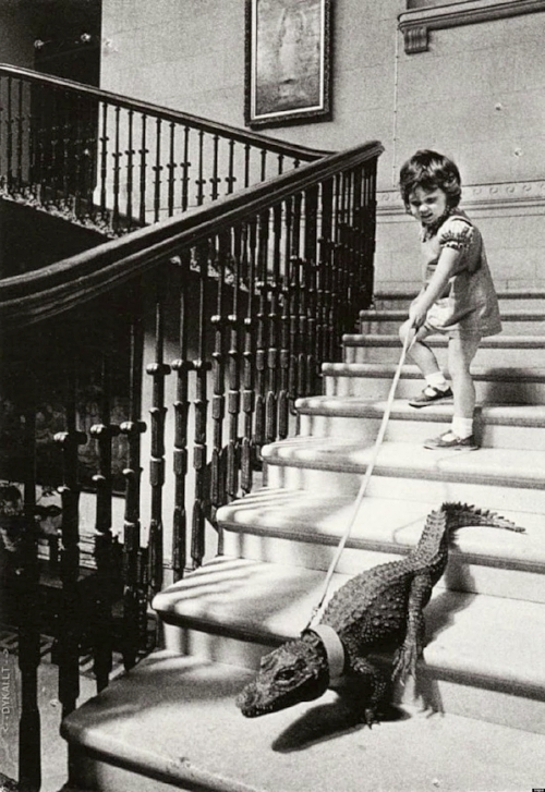 A+girl+walking+an+alligator+down+the+stairs,+c.+1960s.jpg