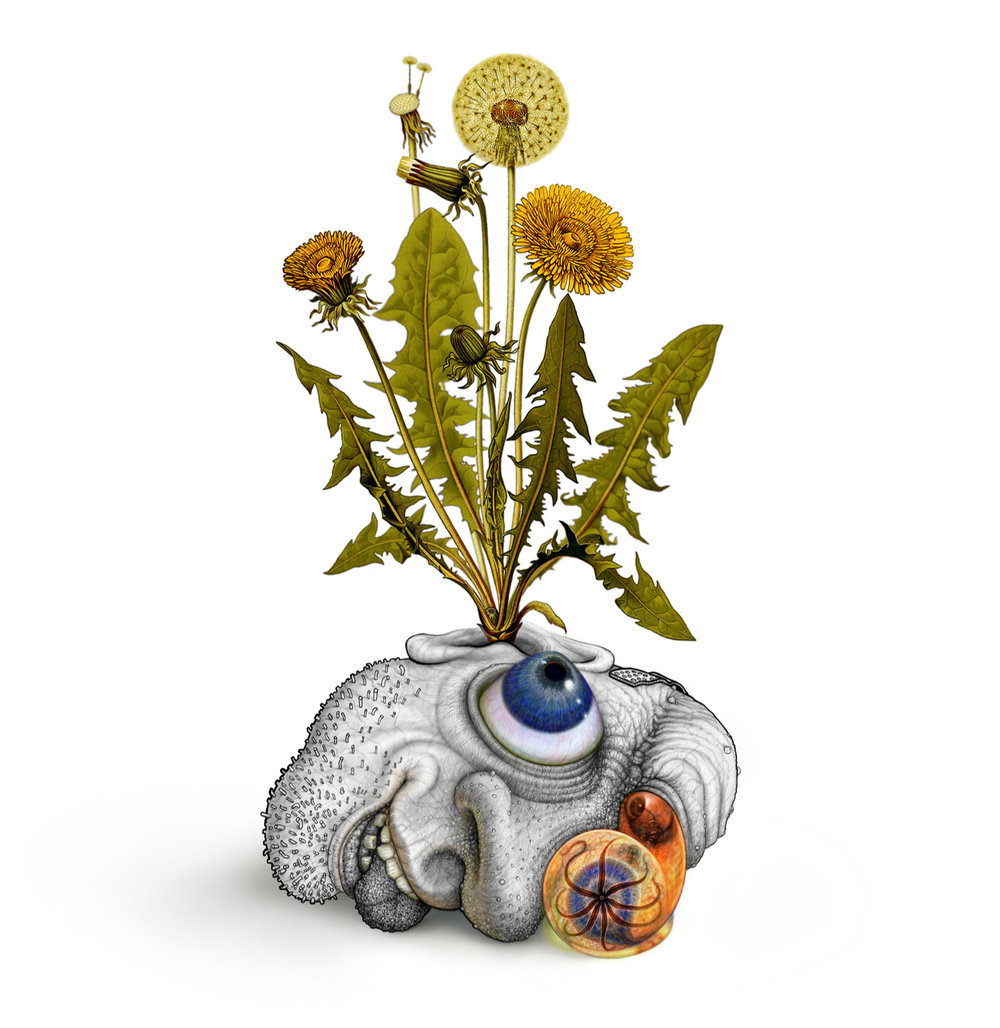 human-bean-flower.jpg