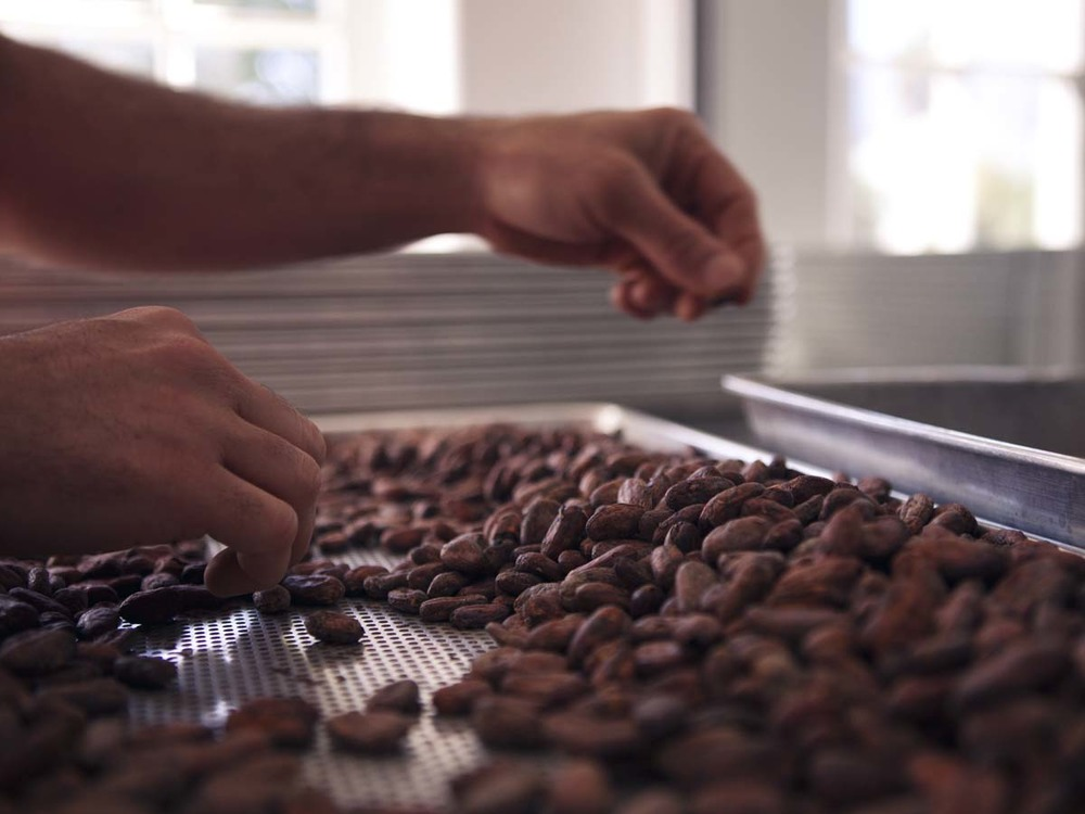 Raw cocoa beans are sorted by hand to remove defective and foreign debris (sticks, leaves, rocks, etc…).