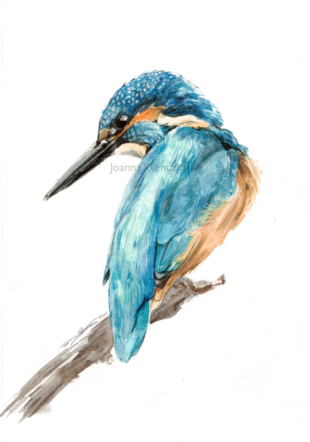 Elvis the Kingfisher