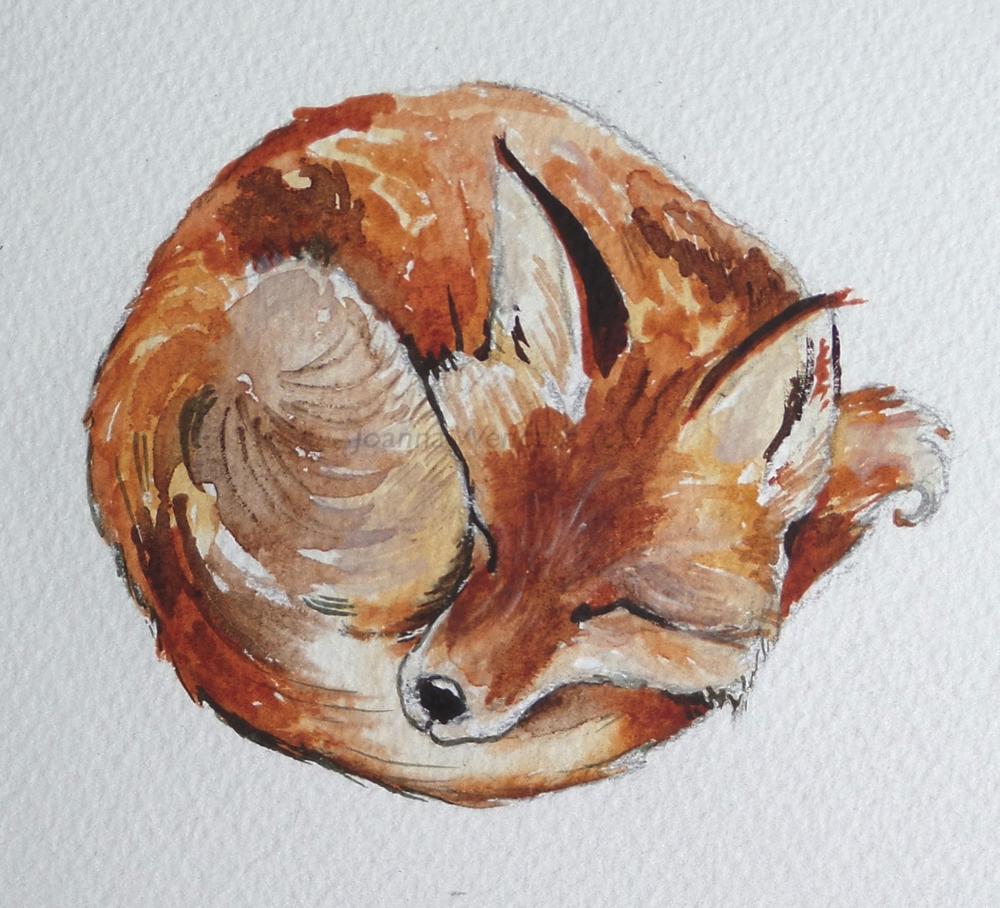 foxy watermarked.jpg