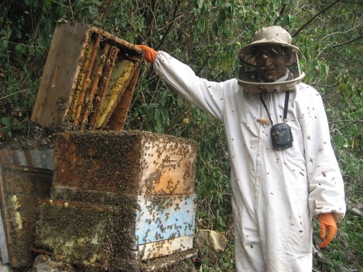 bresne bees_n.jpg