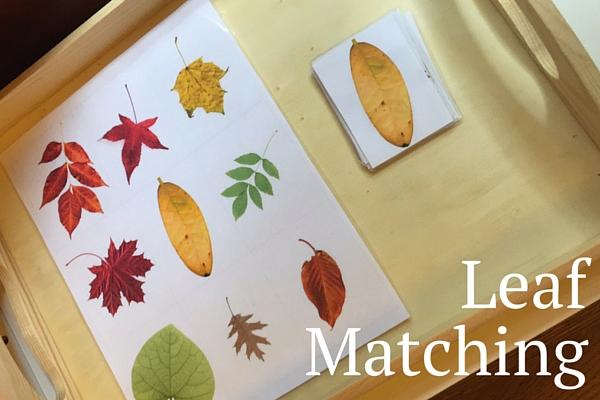 Leaf Matching Printable