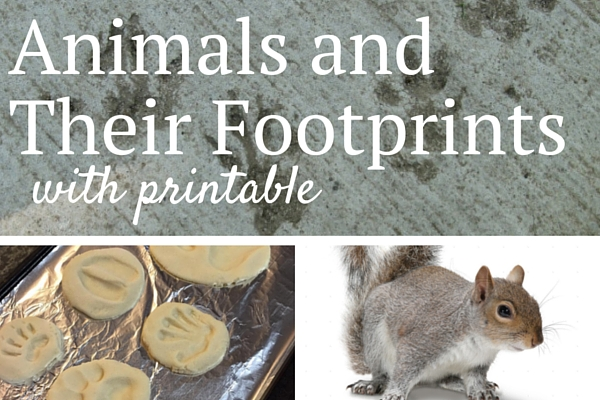 Animals and Their Footprints