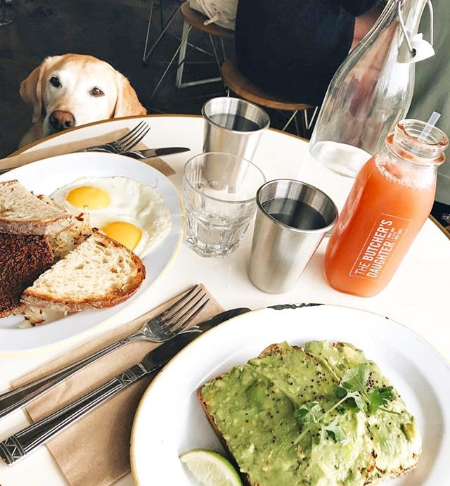Bone Appetit! 🥑🥞🐶 (📷: @toastandapples )