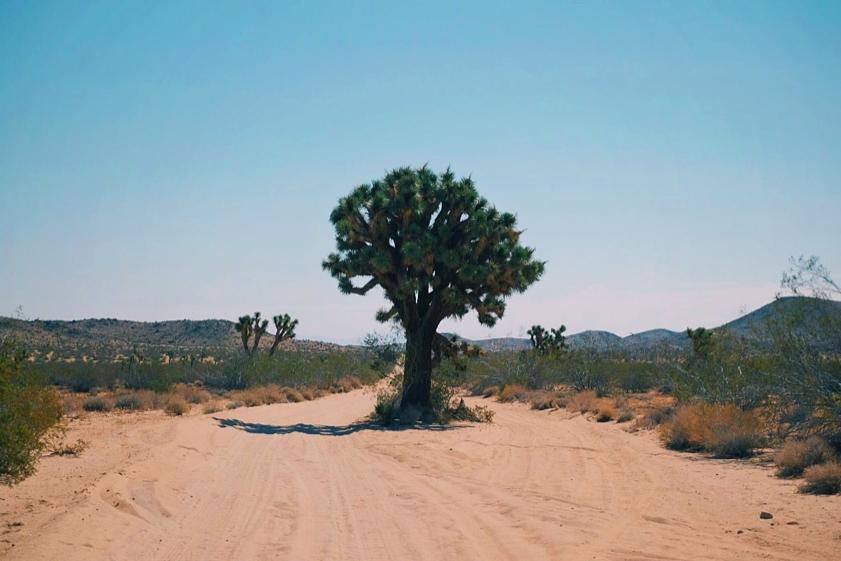 Desert_C.JPG