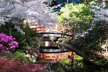 Japanese-Garden-in-Spring-by-John-Stanley-450x300.jpg