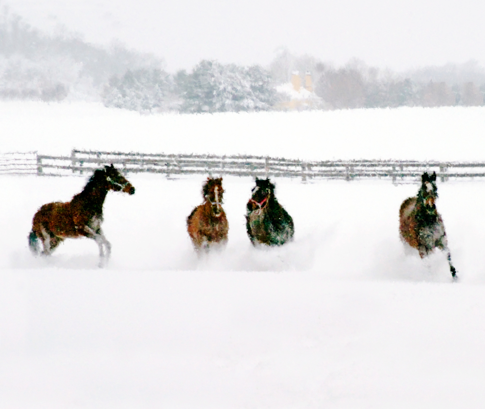 elizabeth-fenwick-photography-painterly-horses-butler-maryland-snowy-play.jpg