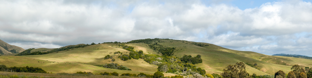 elizabeth-fenwick-photography-painterly-point-reyes-genazzi-ranch-inverness-ca--sky-lines-.jpg