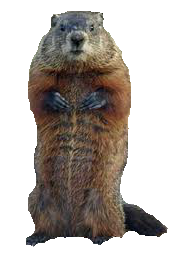 groundhog-png-hd-vandalia-groundhog-removal-for-groundhog-under-the-porch-groundhog-under-the-deck-and-groundhog-under-the-shed-groundhogs-live-under-sheds-194.png