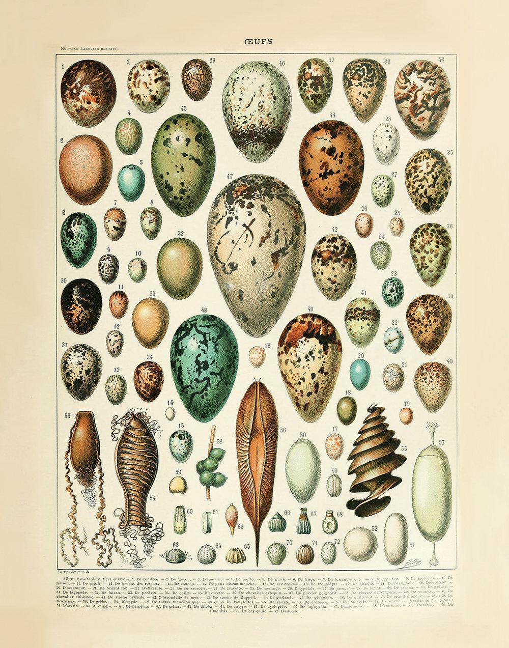 """Eggs (22"""" x 28"""")"""