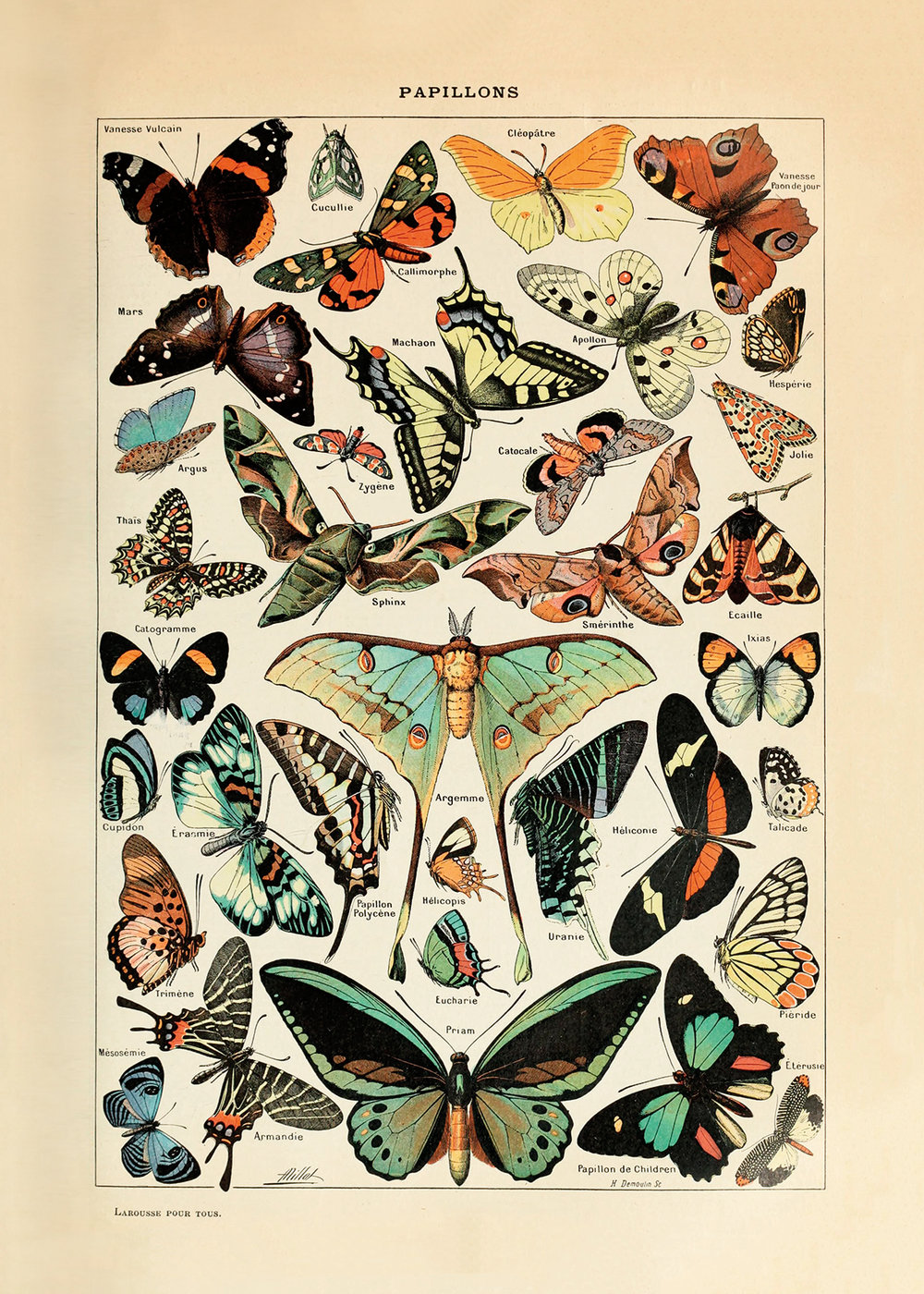 """Butterfly (20"""" x 28"""")"""